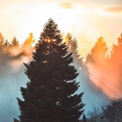mystischer Sonnenuntergang Baum Fichte Nebel Herbststimmung