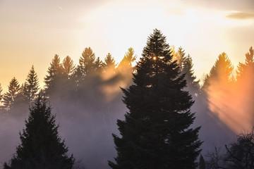 mystischer Sonnenuntergang mit Nebel Baum Wald rot