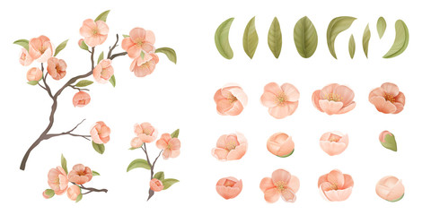 Cherry Flower Set Isolate on White Background. Pink Sakura Blossom, Green Leaves and Branches, Design Elements for Graphic Design Printable Banner, Poster or Flyers Decoration. Vector Illustration