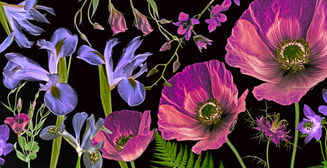 three poppies, irises and other flowers  on black background botanical art picture