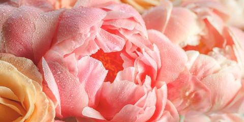 Fresh bunch of pink peonies and roses. Toned image, card Concept, pastel colors, banner size
