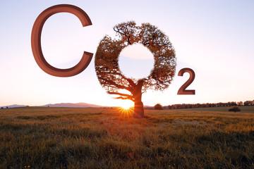 Klimaschutz, CO2 Baum mit Sonne