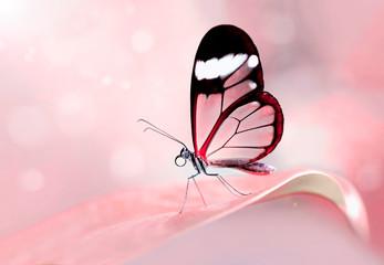 Fond de hotte en verre imprimé Papillon Glasswing Butterfly (Greta oto) in a summer garden