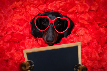 Keuken foto achterwand Crazy dog valentines wedding dog in love