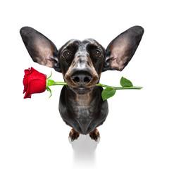 Autocollant pour porte Chien de Crazy valentines wedding dog in love
