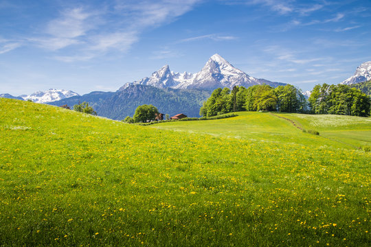 Idyllic landscape in the Alps with blooming meadows and snowcapped mountain peaks in springtime