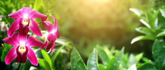 Fototapete - Beautiful magic spring scene with orchid flowers
