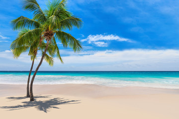 Foto auf Leinwand Palms Sunny white sand beach with coconut palm and turquoise sea. Summer vacation and tropical beach concept.