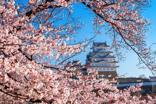 Wall mural Cherry blossoms and castle in Himeji, Japan.