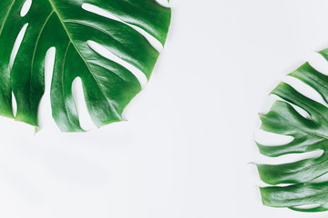Tuinposter Bloemen Green leaf of monstera on isolated white background. Floral, botanical, nature plant concept