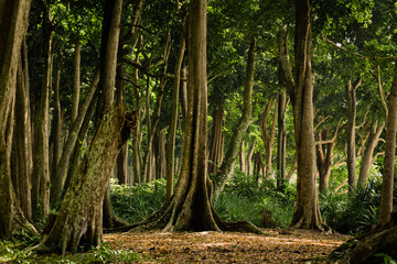Fototapeten Straße im Wald Tropical Forest on Havelock Island, Andaman and Nicobar Islands, India