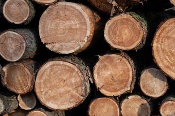 Pile OF Pine Tree Logs Background