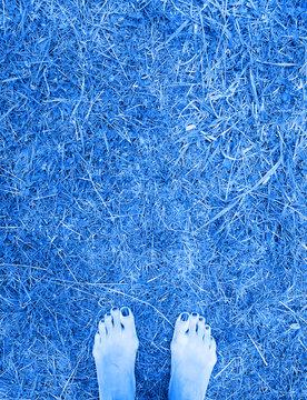 Female bare feet on dry grass. Classic blue tone. Horror blue tint