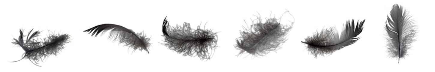 Abstract black feathers floating in the air. Black feather isolated on white background. Fotomurales