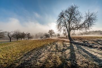 Entlaubter Kastanienbaum im gegenlicht mit Schatten