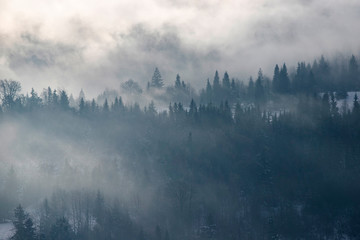 Spoed Fotobehang Ochtendstond met mist Winter forest in dramatic sunrise with fog in the Carpathians, Romania.