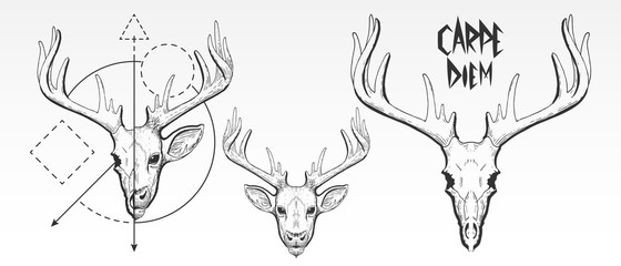 Hand Drawn, deer skull and face silhouette. Vintage deer head vector illustration, scratchboard, engraving, black ink, line art drawing style with geometric shapes and Carpe Diem slogan