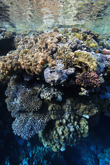 Wall Mural - Tropical coral reef
