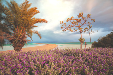 Fototapete - Tropical nature landscape. Palm trees on the beach of the Dead Sea in dramatic sunset light. Seashore with tropical plants