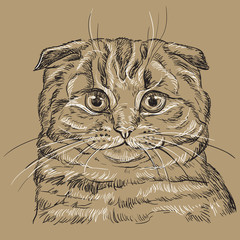 Canvas Prints Hand drawn Sketch of animals Brown vector cat portrait 4
