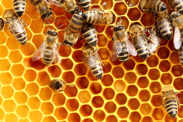 detailed view of working bees