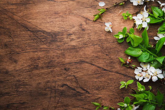 Spring blooming branches on wooden background. White Cherry blossoms top view, copy space