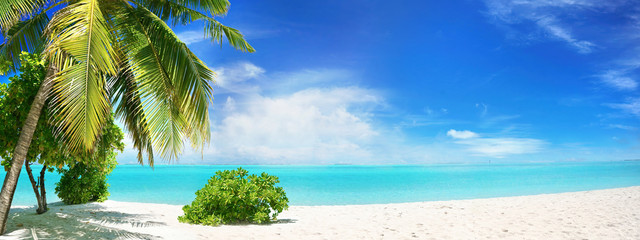 Beautiful tropical beach with white sand, palm tree,  turquoise ocean on  background blue sky with clouds on sunny summer day. Perfect landscape background for relaxing vacation, island of Maldives.