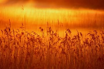 In de dag Oranje eclat Fog over wetlands with sunrise
