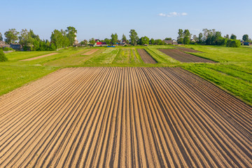 Plowing land furrows for planting agronomical plants among the countryside of grass and meadows trees, aerial view from above. Fotomurales