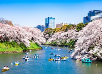 桜満開の皇居・千鳥ヶ淵