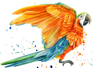 yellow parrot and paint splashes, isolated white background, watercolor drawing, tropical birds poster