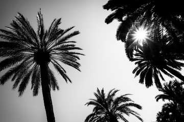 Fotobehang Palm boom Sun and silhouette of palm trees