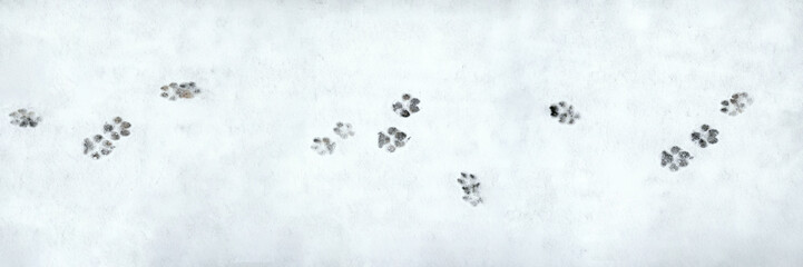 Banner of dog footprint. Pattern on white backdrop. Winter season symbol. Snowy weather. Winter walk. Stock photo.