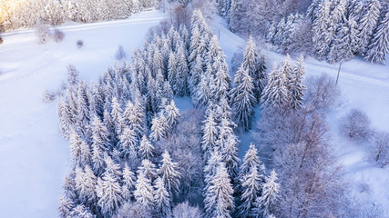 Aerial view of the forest at winter.