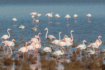 Papiers peints Flamingo Flamants roses en Camargue
