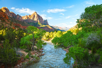 Spring green in Zion, Utah, USA.