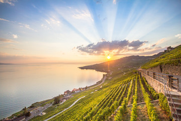 Photo sur Toile Vignoble Vineyards in Lavaux region, Switzerland