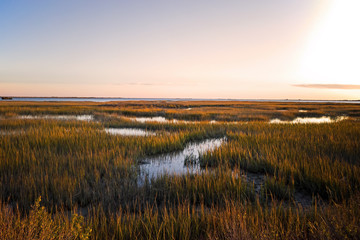 Saltmarsh on the Virginia coast in USA in the golden sun at sunset.  Known as a coastal salt marsh or tidal marsh it is located between land and brackish water that is regularly flooded by the tides. Wall mural
