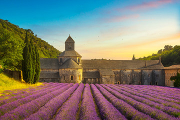 Abbey of Senanque blooming lavender flowers panoramic view. Gordes, Luberon, Provence, France.