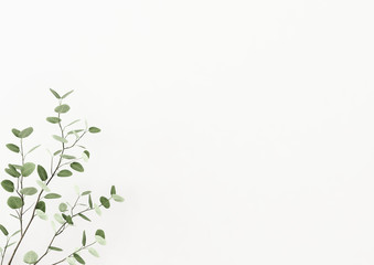 Interior wall mockup decorated with plant branch with green leaves in the left corner on empty white background. 3D rendering, illustration. Fototapete