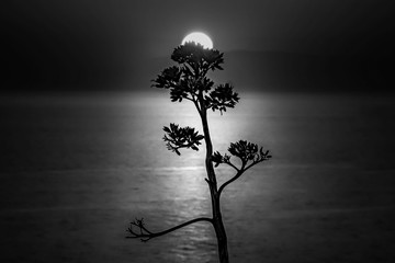 Monochrome picture of a tree with the sea and the sun on the blurry background