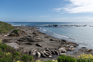 Elephant Seal Vista Point in California, United States. West Coast.