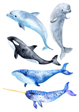 Sea animals isolated on white background. Killer whale, blue whale, beluga whale, narwhal and bottlenose dolphin.