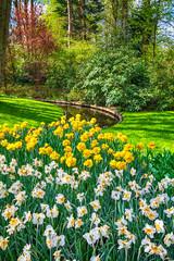 Wall Mural - multicolored Tulips in the Keukenhof park in Netherlands