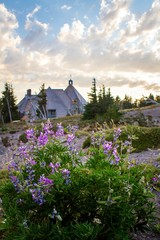 Lot of purple flowers blooming in front of a haunted house in Mt. Hood National Forest, USA