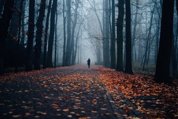 Foto op Canvas Bomen Person walking on the sidewalk covered with autumnal leaves surrounded by trees