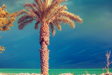 Fototapete - Palm trees on the beach of the Dead Sea on a background of the dramatic sky. Natural landscape