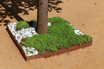 Aménagement paysager - végétalisation du pied d'un tronc d'arbre