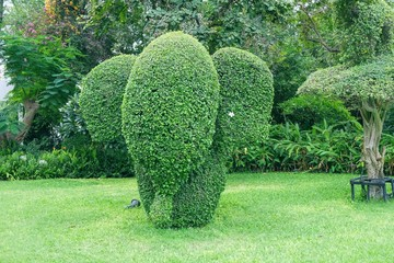 Cute Elephant shaped topiary with elegant white plumeria in ear on green lawn in public park in Thailand. Trimming ornamental shrub is very popular landscaping and gardening in Asia.Topiary clipping.