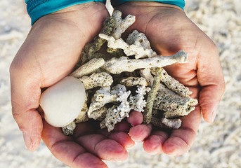 Shells and corals in the hands founded on a strip of sand after low tide.
